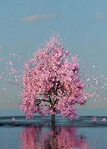 3D Kirschlütenbaum